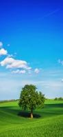 丘陵と大きな緑の木と青空 Redmi Note 9T Androidスマホ壁紙・待ち受け