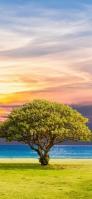 緑の大きな木と海 iPhone 11 Pro スマホ壁紙・待ち受け