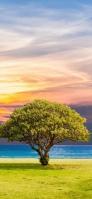 夕焼け 青い海 黄緑の木 iPhone 12 スマホ壁紙・待ち受け