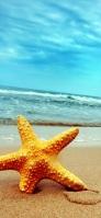 黄色いヒトデ 砂浜 iPhone 12 スマホ壁紙・待ち受け
