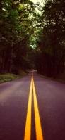緑の森の中の黒い道路 iPhone 12 スマホ壁紙・待ち受け