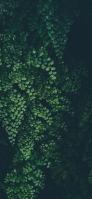 緑の綺麗な草 iPhone 12 スマホ壁紙・待ち受け