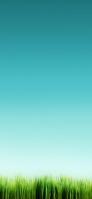 綺麗な緑の雑草と青空 iPhone 11 Pro Max スマホ壁紙・待ち受け
