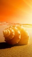 形の綺麗な貝殻 夕日 iPhone SE (第2世代) スマホ壁紙・待ち受け