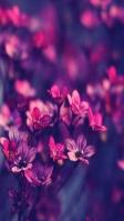 可愛い赤い小さな花 iPhone SE (第2世代) スマホ壁紙・待ち受け