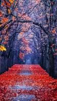 秋 綺麗な並木道 赤い絨毯 iPhone SE (第2世代) スマホ壁紙・待ち受け