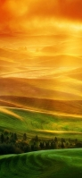 黄色と緑色が交わる風景 iPhone 11 スマホ壁紙・待ち受け