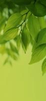 綺麗な新緑 iPhone 11 スマホ壁紙・待ち受け
