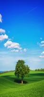 青空と丘陵と大きな木 iPhone 11 スマホ壁紙・待ち受け