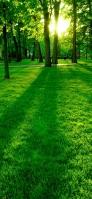 新緑の森 iPhone 11 スマホ壁紙・待ち受け