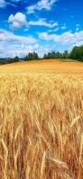 青空とライ麦畑 iPhone 11 スマホ壁紙・待ち受け