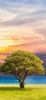 大きな木と夕暮れ iPhone 11 スマホ壁紙・待ち受け