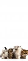 可愛い4匹の猫 Redmi Note 9T Androidスマホ壁紙・待ち受け