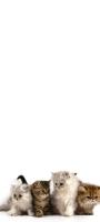 4匹の可愛い猫 Redmi Note 9S Androidスマホ壁紙・待ち受け