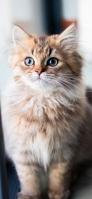 きょとんとする可愛い猫 iPhone 11 Pro スマホ壁紙・待ち受け
