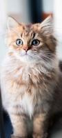 ちょこんと座った可愛い猫 Redmi Note 9S Androidスマホ壁紙・待ち受け