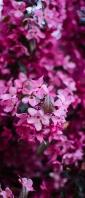 可愛いピンクの小さい花 Xperia 10 III Androidスマホ壁紙・待ち受け