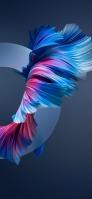 綺麗な金魚の尾鰭 iPhone 12 mini スマホ壁紙・待ち受け