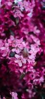 小さい綺麗なピンクの花 iPhone 12 mini スマホ壁紙・待ち受け