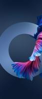綺麗な青い魚の尾びれ Xperia 10 II Androidスマホ壁紙・待ち受け