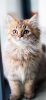 凛とした表情の猫 iPhone 12 mini スマホ壁紙・待ち受け