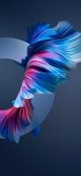 綺麗な金魚の尾鰭 iPhone 12 Pro スマホ壁紙・待ち受け