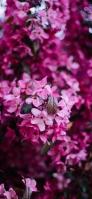 小さい綺麗なピンクの花 iPhone 12 スマホ壁紙・待ち受け