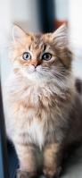 凛とした表情の猫 iPhone 12 スマホ壁紙・待ち受け