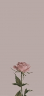 ビンテージ 綺麗なピンクの薔薇 iPhone 12 スマホ壁紙・待ち受け