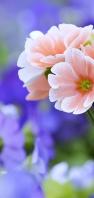 可愛い淡いピンクの花 AQUOS sense4 壁紙・待ち受け