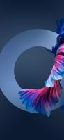 青とピンクの金魚の尾ヒレ 円 iPhone 12 スマホ壁紙・待ち受け