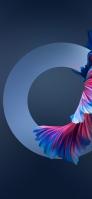 赤と青の魚の尾ヒレ 円 iPhone 12 mini スマホ壁紙・待ち受け