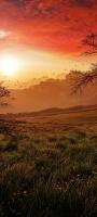 オレンジ色に染まる景色 渡り鳥 Galaxy A32 5G 壁紙・待ち受け
