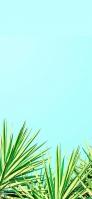 綺麗な雑草と空 iPhone 12 mini スマホ壁紙・待ち受け