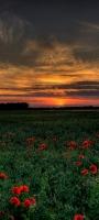 夕焼け 赤い花畑 OPPO Reno5 A Androidスマホ壁紙・待ち受け