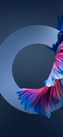 サークル 青・ピンクの綺麗な魚の尾びれ OPPO Reno A Android スマホ壁紙・待ち受け